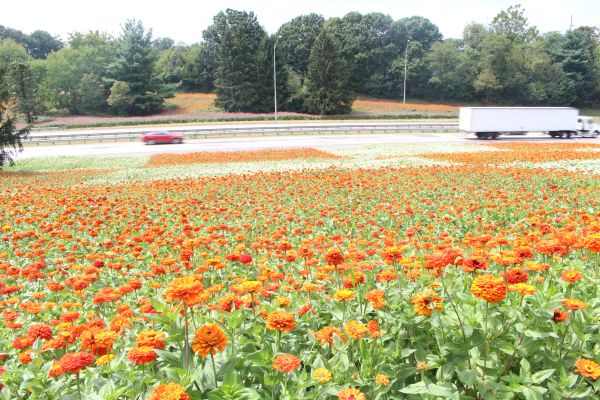 The Importance of Plants to Beautify Public Places