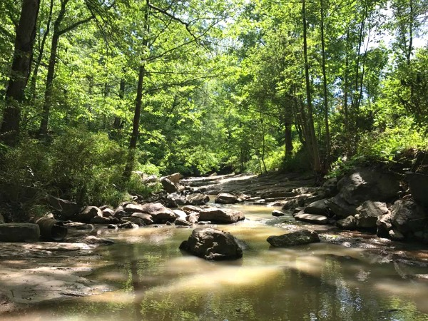 A Walk in the Botanical Gardens of Asheville